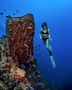 Komi Werner - Exploring the depths of #Dominica , we came across these giant sea…