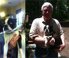"""REUNITED!!!  """"Pudge"""", the Boston Terrier found this week, has been reunited with his family! Great job to Anne Henderson Mancer for spotting this little guy running down Highway 78 in Moody, AL and caring for him until his family was found.  A big thank you goes out to everyone for sharing his post and sending good thoughts to him!"""