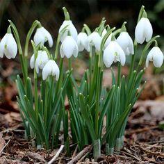 66 Meilleures Images Du Tableau Bulbes A Fleurs Beautiful Gardens