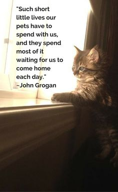 """""""Such short little lives our pets have to spend with us, and they spend most of it waiting for us to come home each day."""" —John Grogan"""