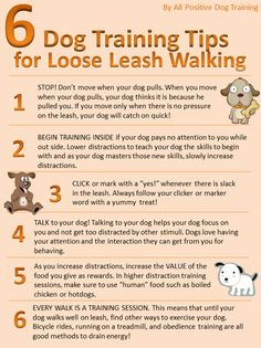 Dog Training Tips #dogtraining #dogs http://www.allpositivedogtraining.com