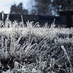 Ice Ice baby... #frost #winter #holidays #vacation #hike #family #firstfroat #germany #home #pfalz #pfälzerwald Ice Ice Baby, Winter Holidays, Frost, Germany, Hiking, Vacation, Instagram, Flowers, Plants