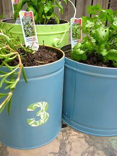 container garden from popcorn tins!