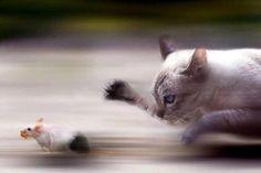 고양이가 쥐잡는 찰나.