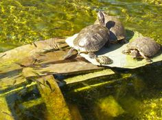 turtle central