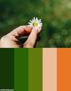Hand Hält Eine Gänseblume Vor Unscharfem Hintergrund. Frühling Color Scheme from colorhunter.com