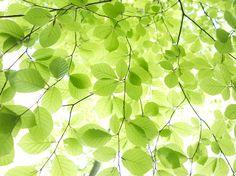 Photo by Tine Bernsen I miss Spring Nature Nordic Fine Art