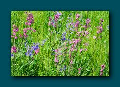 Photo wildflowers wild flowers nature Photo wall art