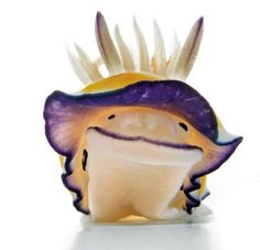 """""""Aww Cute Sea Slug"""" 5 April Monday I know you guys are wondering , """"Why am I talking about Sea Slugs ? My mom bought sea slugs from . Underwater Creatures, Underwater Life, Ocean Creatures, Beautiful Creatures, Animals Beautiful, Animals And Pets, Cute Animals, Exotic Animals, Smiling Animals"""