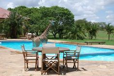 Safari+animals+masaimara+national+park+kruger+national+park+beautiful+dangerous+animal+attacks+news+animal+in+swimming+pools+funny+pictures.jpg 497×333 pixels