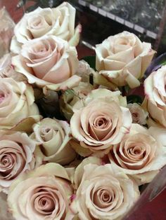So, I'm pretty much obsessed with these quicksand roses that will be in my bouquet.