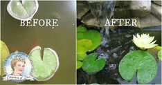 Can& see your pond fish because the water looks like pea soup? Try this Empress of Dirt clean water trick. Many pond owners say it clears their water in hours, even after years of struggle.
