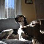 Sharing a sunbeam...