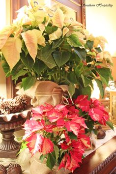 Wrap poinsettias with burlap and twine to hide the shiny gold wrapper they come in. :)