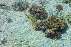 Increíble naturaleza bajo el agua.