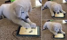 Ruby the puppy is baffled by fish catching tablet game