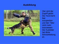 Polizeihunde - GSM - Bremen