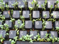 plants, keyboard, and green image Pale Tumblr, Zack E Cody, Theme Nature, Nature Nature, Plant Aesthetic, Aesthetic Boy, Aesthetic Black, Aesthetic Fashion, Plants Are Friends