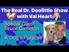 A Dog's Purpose - W. Bruce Cameron on The Real Dr. A Dogs Purpose, Soul Contract, Animal Communication, Horse, Animals, Animales, Animaux, Horses, Animal