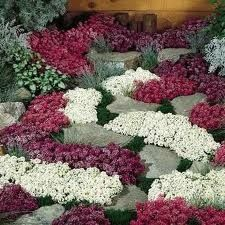 I LOVE alyssum, I can just smell this RIGHT NOW!!