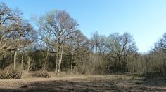 Epping Forest Favourite Family Walking Route Coppicing Trees