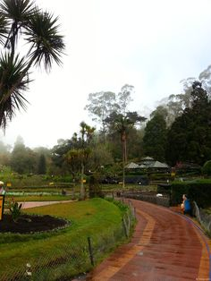 """A view inside the Bryant Park, a Botanical Garden in Kodaikanal Hill Station in Tamilnadu, India. Kodaikanal is called the """"Princess of Hill Stations"""", the other Hill Station in Tamilnadu, Ooty being called the """"Queen of Hill Stations"""".    Spread over 20 acres, this park was planned and built in 1908 by a forest officer from Madurai, H.D.Bryant. It is home to 325 species of flora including nearly 740 varieties of roses. There is also an Eucalyptus tree planted in 1857 & a Bodhi Tree here."""
