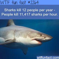 How many people do sharks kill every year? - WTF fun facts