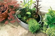 The Ultimate Guide To DIY Outdoor/Indoor Mini Fish Ponds   STEP-BY-STE – AQUAPROS Ponds For Small Gardens, Small Ponds, Patio Pond, Ponds Backyard, Modern Backyard, Small Water Features, Water Features In The Garden, Container Water Gardens, Container Gardening