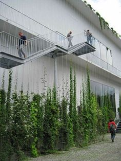 Stunning Vertical Garden Ideas To Make Your Home Fresh And Cool Once you've designed your garden, pick the plants that you want to grow during each season. There's no better solution than to bring a vertical garden. While arranging a vertical garden… Green Architecture, Landscape Architecture, Landscape Design, Garden Ideas To Make, Wire Trellis, Vertical Garden Design, Vertical Gardens, Green Facade, Plant Aesthetic