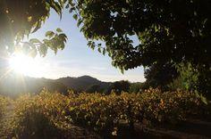 Sonoma Sun