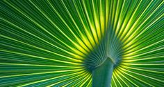 Palm Frond. (Photo by Gary W. Carter/Corbis