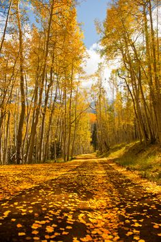 The Yellow Dirt Road