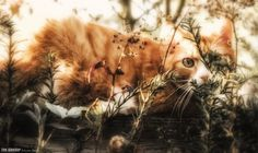 Caturday by Eve Alexder on 500px.com