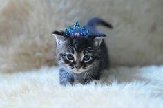 kitten royalty