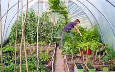 Polytunnel - How to extend your growing season and range of plants with a polytunnel