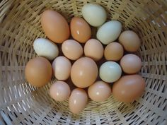 Our beautiful eggs!