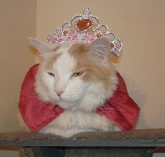 Beauty Pageant Pussy