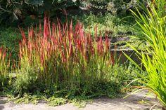 Plant Species, Baron, Herbs, Plants, Outdoor, Google, Garden Ideas, Gardening, Products