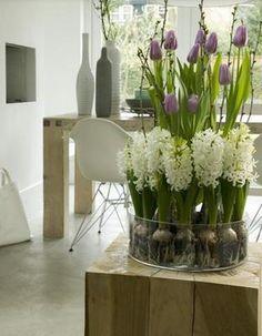 spring home decor white hyacinth purple tulips arrangement dining room - Spring Flowering Bulbs, Spring Bulbs, Tulpen Arrangements, Floral Arrangements, Onion Flower, Indoor Water Garden, Water Gardens, Purple Tulips, Tulips Flowers
