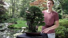 New movie; care guidelines for the Juniper Bonsai. See: http://www.bonsaiempire.com/tree-species/juniper#movie #bonsai