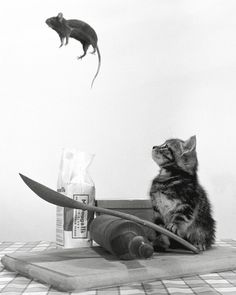 Cat and Mouse - Air born by Rex Interstock