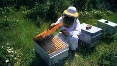 プロヴァンスの黄金, ハチミツ, ティエリー・ランソン, 養蜂, Honey, the gold of Provence