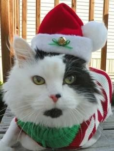 272 best christmas cats kittens images on pinterest christmas christmas kitty spiritdancerdesigns Images