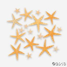 Natural Starfish Assortment - $6.25 for 30 pieces at Oriental Trading