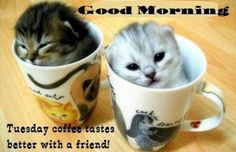 Good Morning...Tuesday coffee tastes better with a friend!
