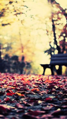 Autumn Leaves Park Bench iPhone 5 Wallpaper