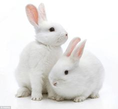 Image result for pics of rabbits