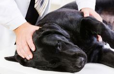Dog Flu Outbreak: What You Need to Know - DISCOVERY NEWS #Dog, #Flu, #Health