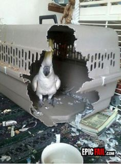Cage FAIL / Parrot WIN