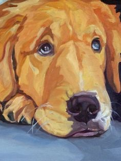"splashduck ""cute adorable animal pictures"" collection. Golden Retriever Pet Portrait Oil Painting 